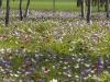 Jaro v Galilei.