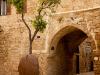Plující oranžovník - Jaffa.