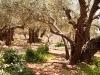 Getsemanská zahrada.